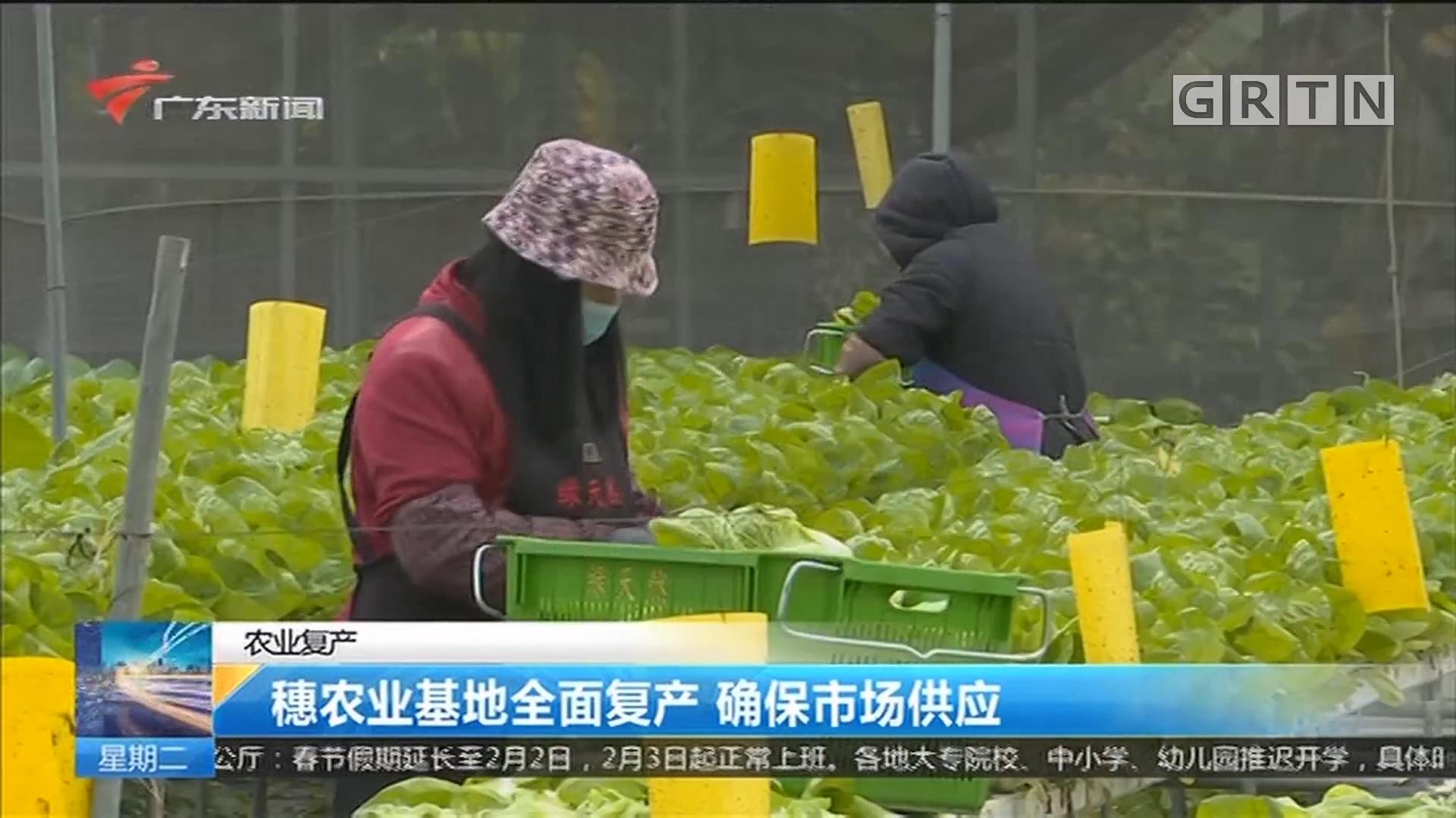 农业复产:穗农业基地全面复产 确保市场供应