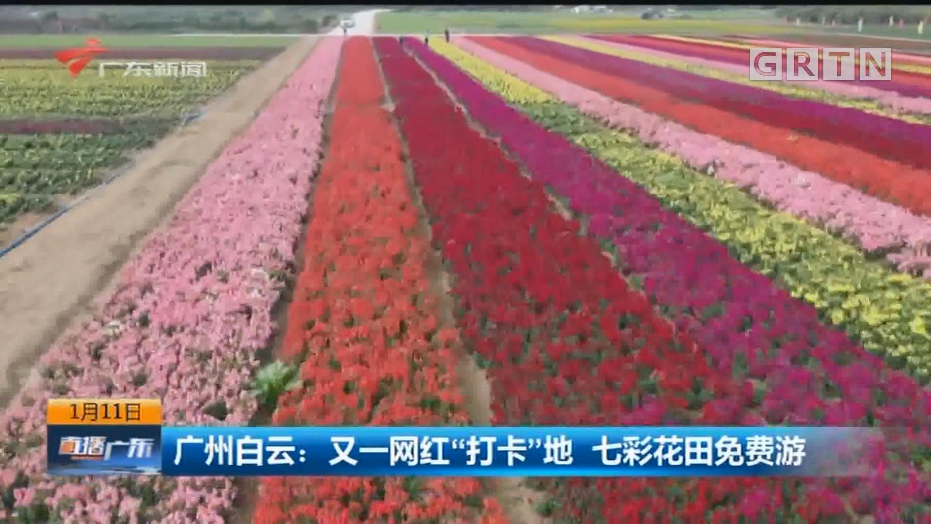"""广州白云:又一网红""""打卡""""地 七彩花田免费游"""