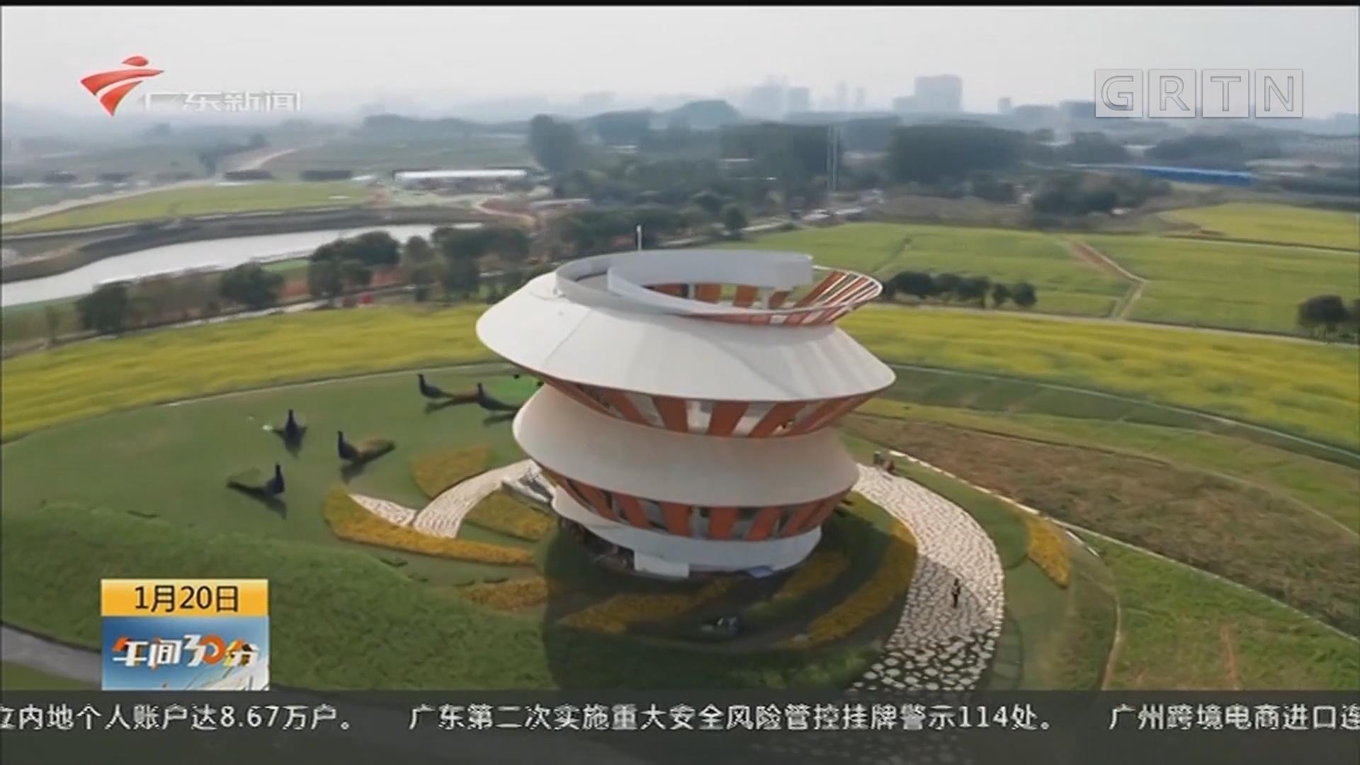深圳光明:千亩油菜花初放 欢乐田园中国年