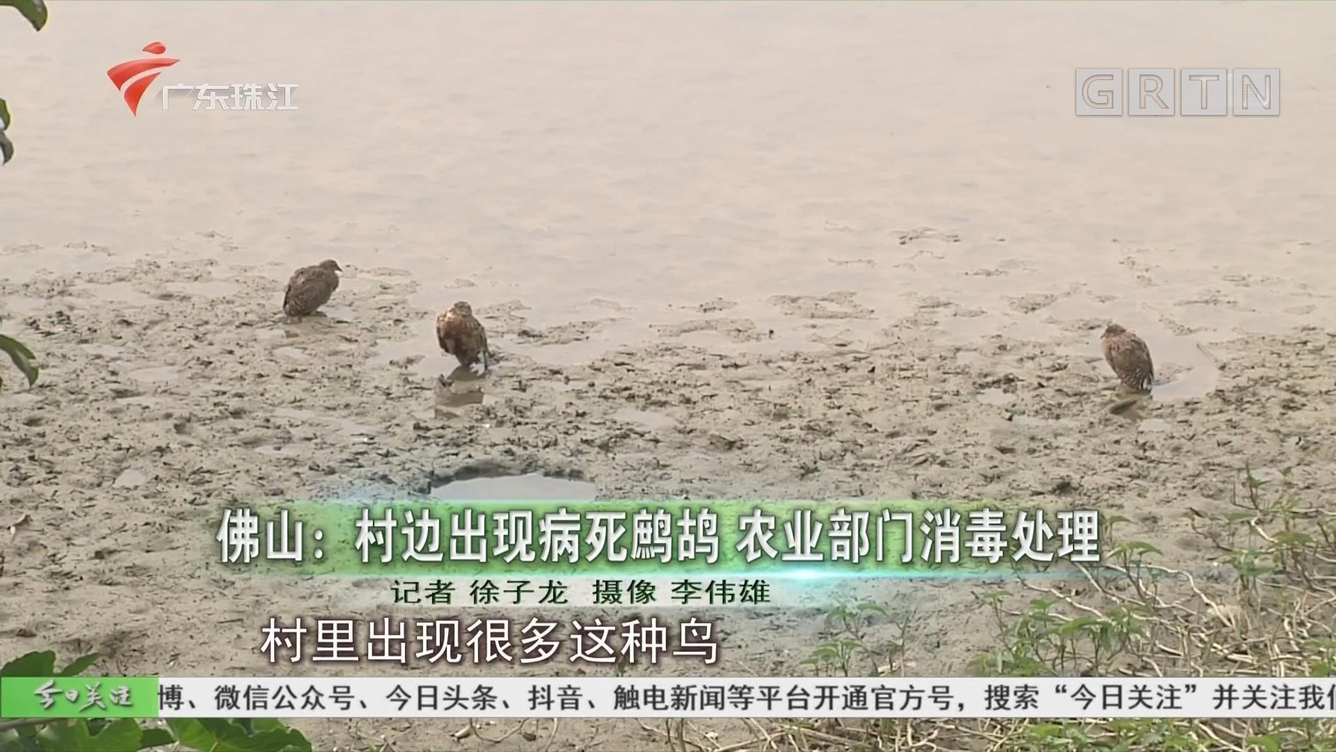佛山:村边出现病死鹧鸪 农业部门消毒处理