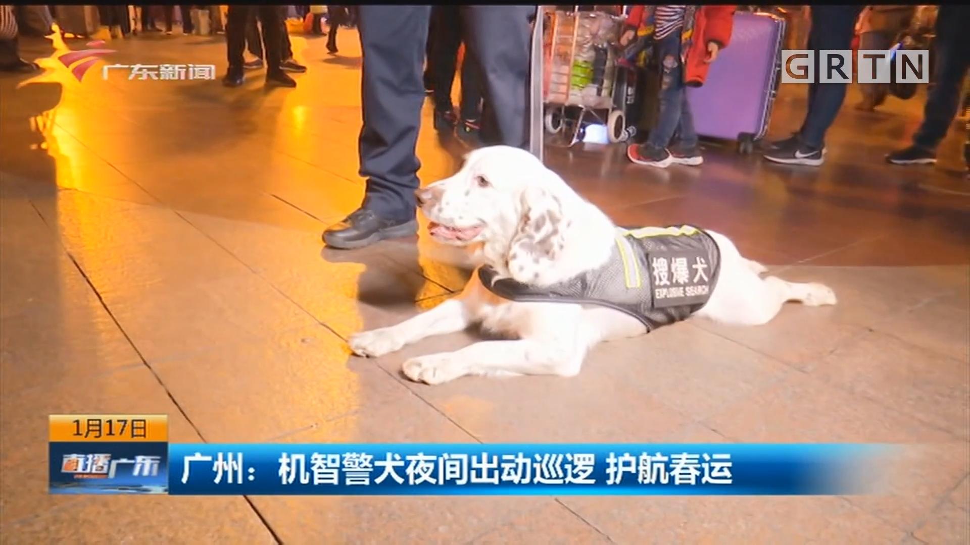 广州:机智警犬夜间出动巡逻 护航春运