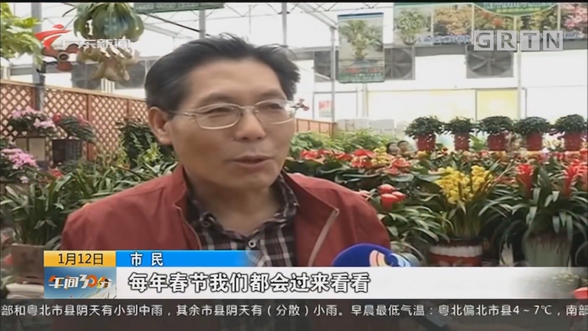 """佛山:迎春花市陆续""""开锣"""" 高端年花走俏"""