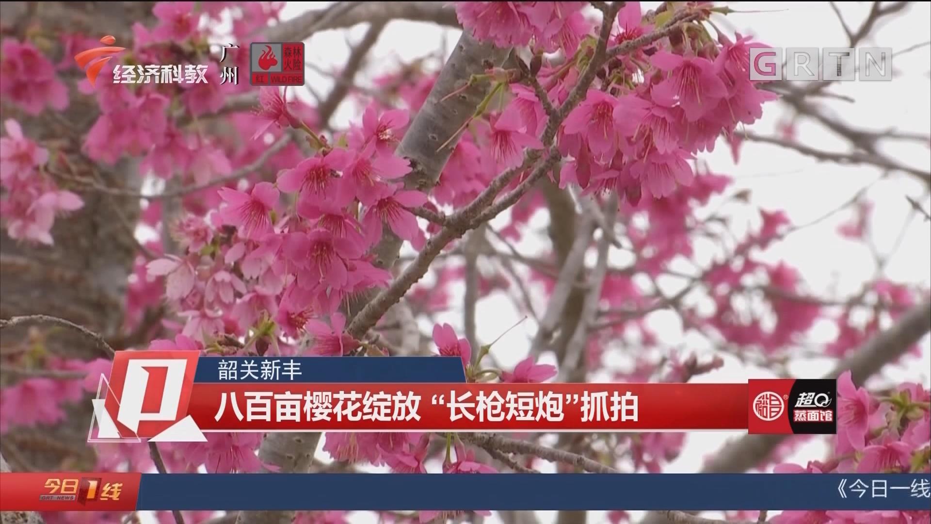 """韶关新丰 八百亩樱花绽放 """"长枪短炮""""抓拍"""
