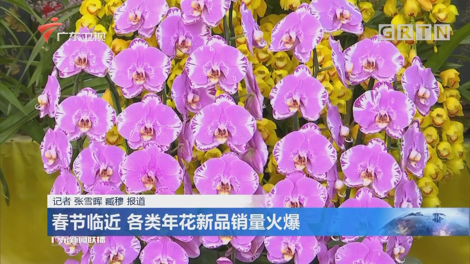 春节临近 各类年花新品销量火爆