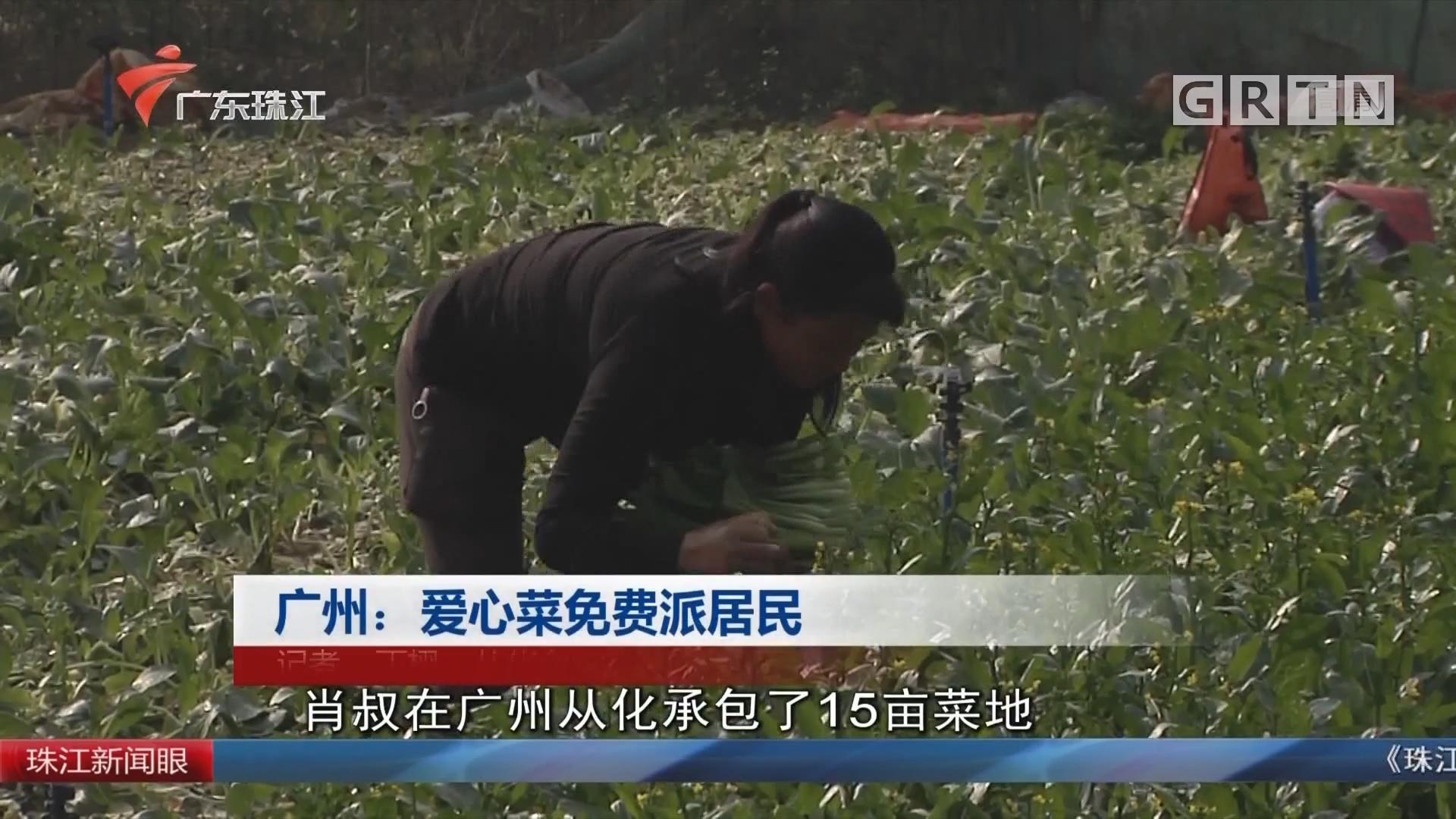 广州:爱心菜免费派居民