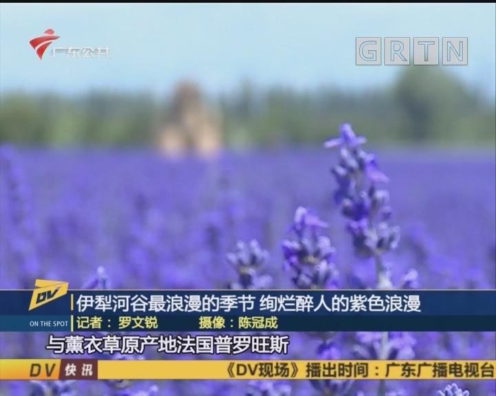 (DV現場)伊犁河谷最浪漫的季節 絢爛醉人的紫色浪漫