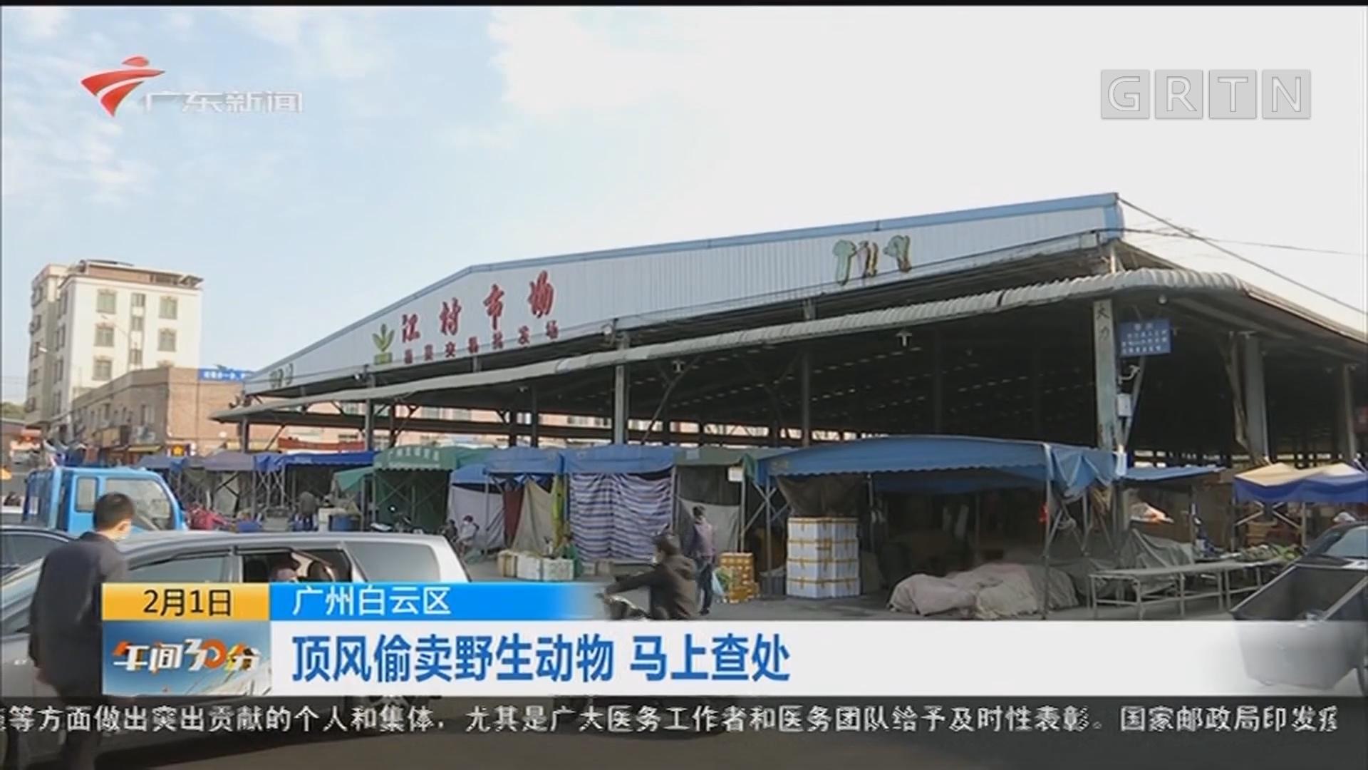 广州白云区:顶风偷卖野生动物 马上查处
