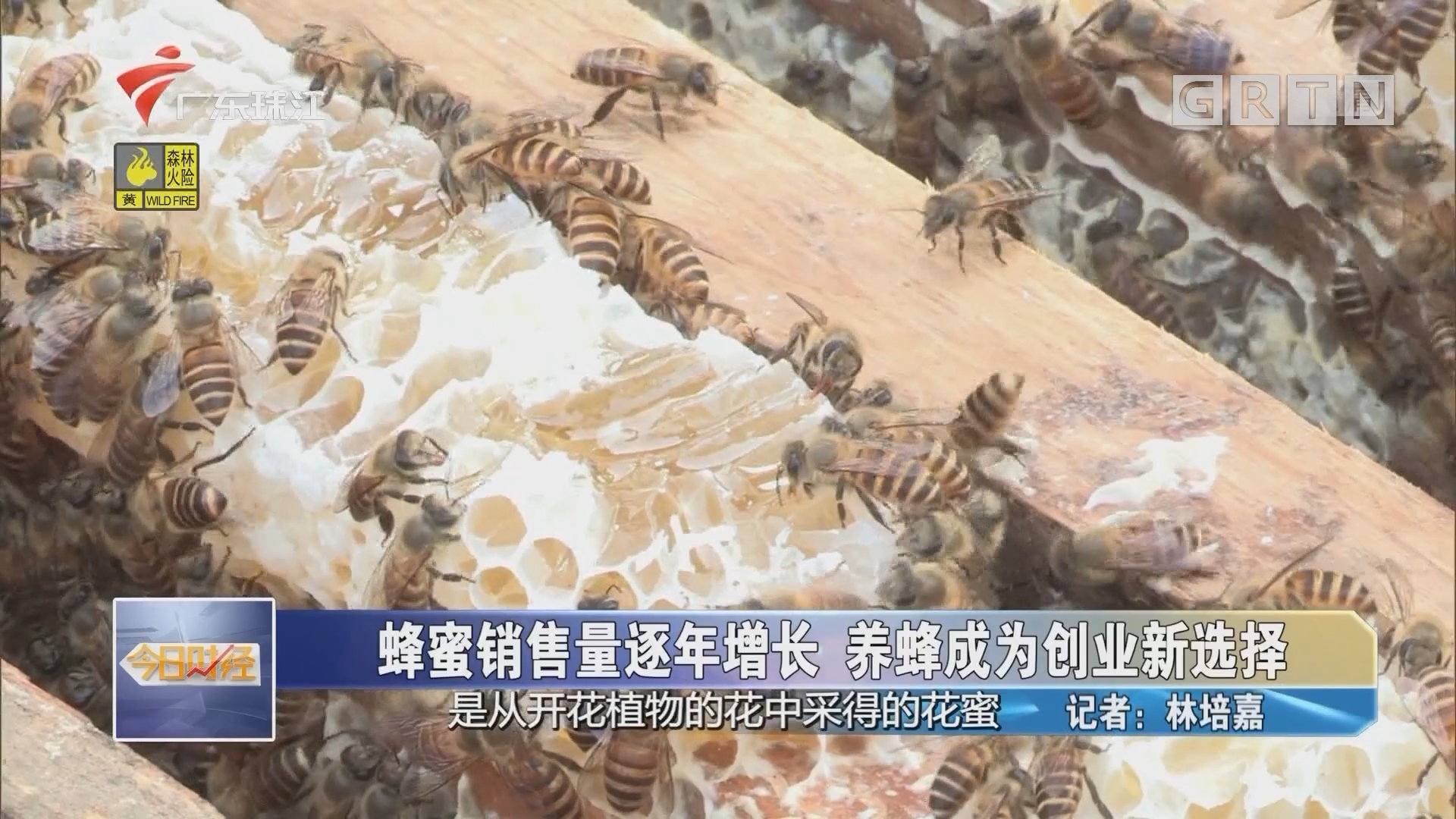 蜂蜜销售量逐年增长 养蜂成为创业新选择
