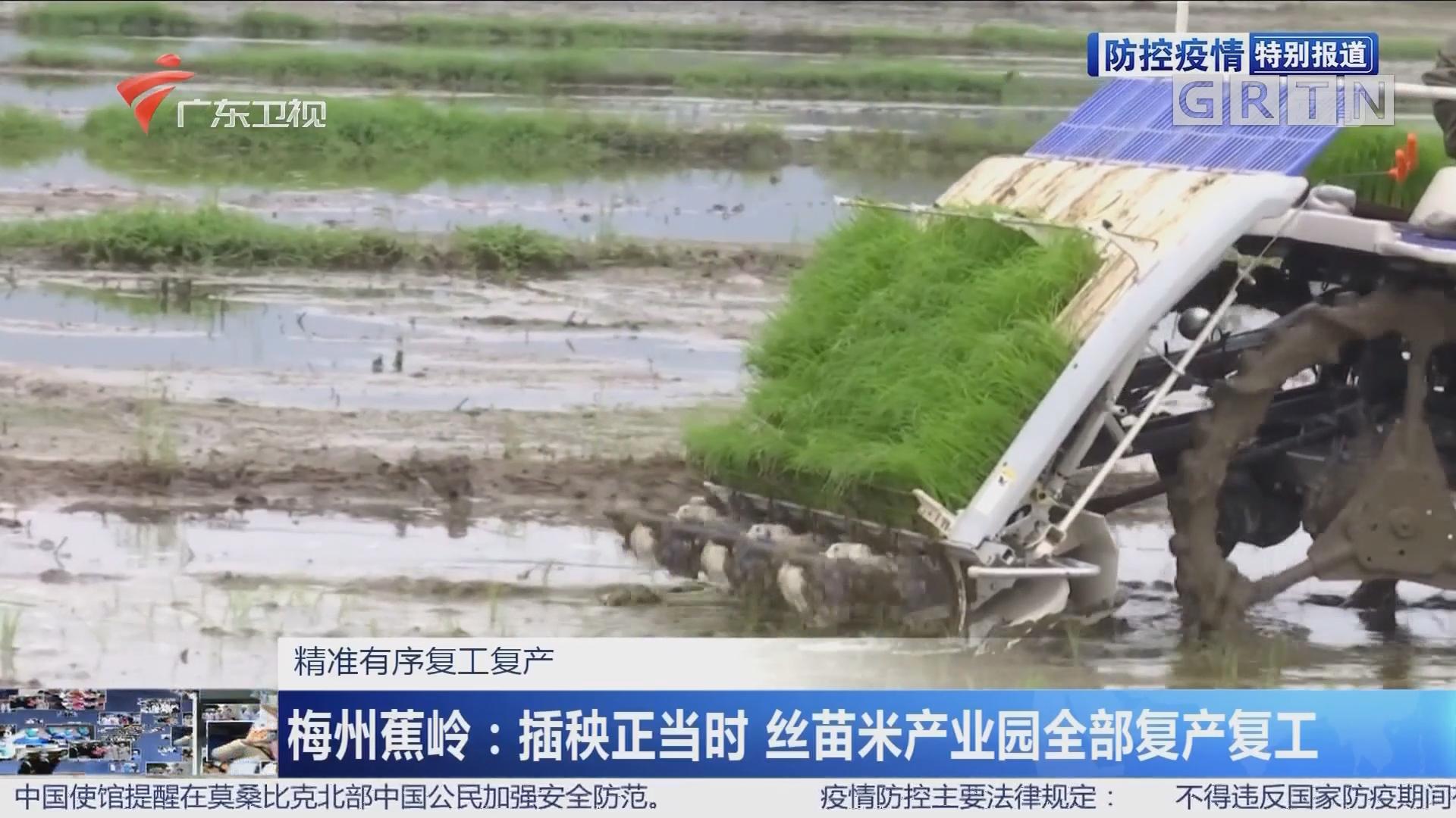 """广东现代农业产业园全面复工复产 全力打响丰收""""第一炮"""""""