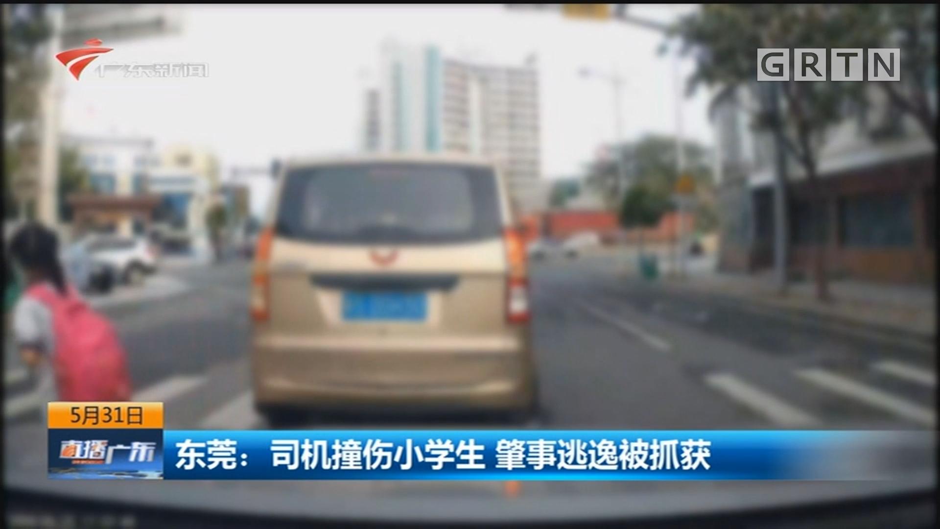 东莞:司机撞伤小学生 肇事逃逸被抓获