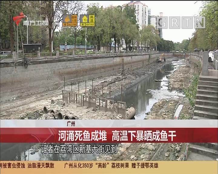 廣州 河涌死魚成堆 高溫下暴曬成魚干