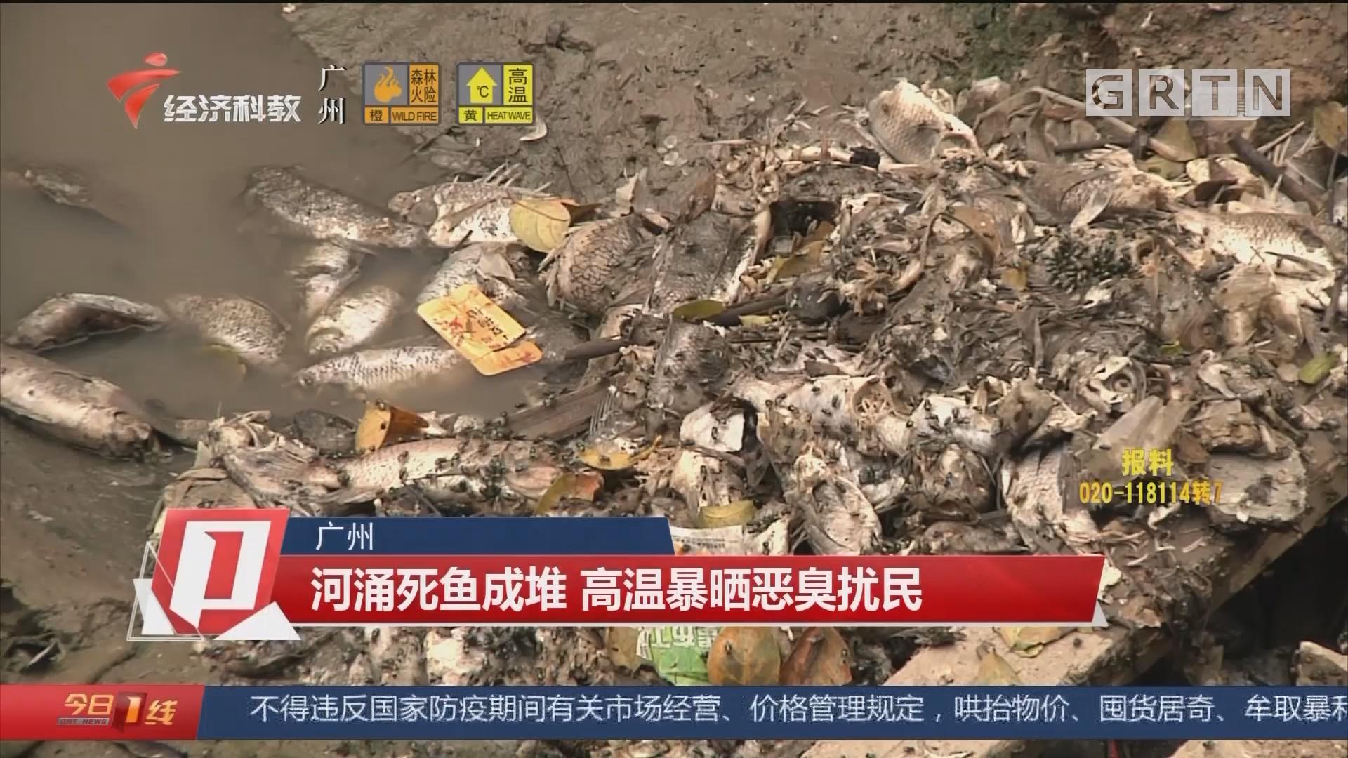 廣州 河涌死魚成堆 高溫暴曬惡臭擾民