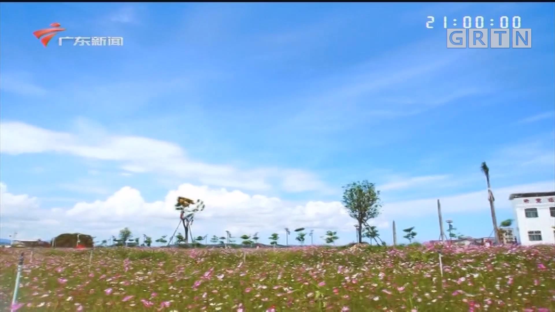 [HD][2020-05-25]社会纵横:杨明芳 关注生猪养殖产业可持续性发展