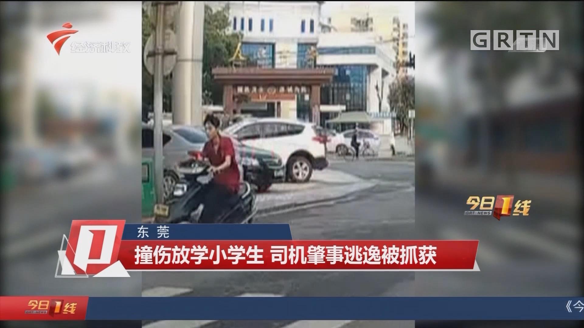 東莞 撞傷放學小學生 司機肇事逃逸被抓獲