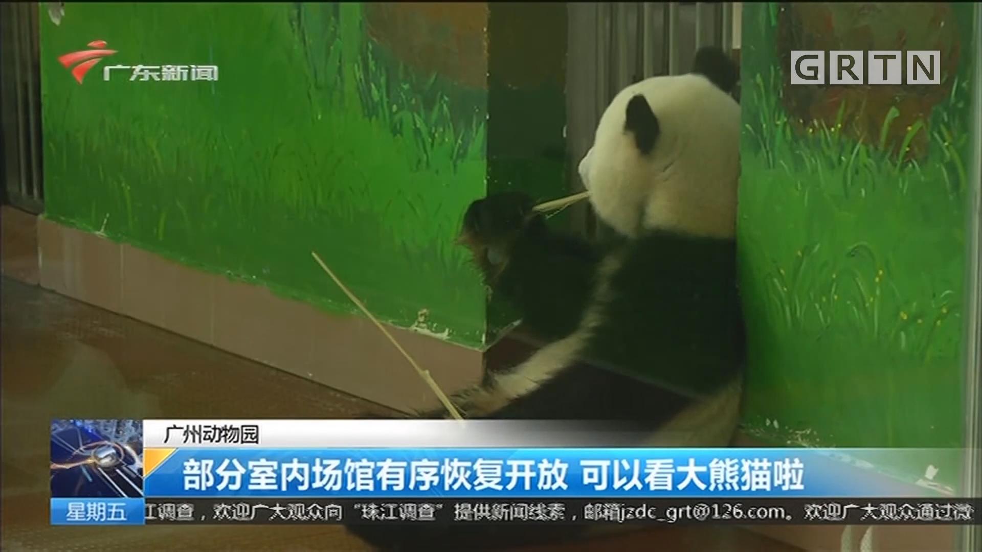 广州动物园:部分室内场馆有序恢复开放 可以看大熊猫啦