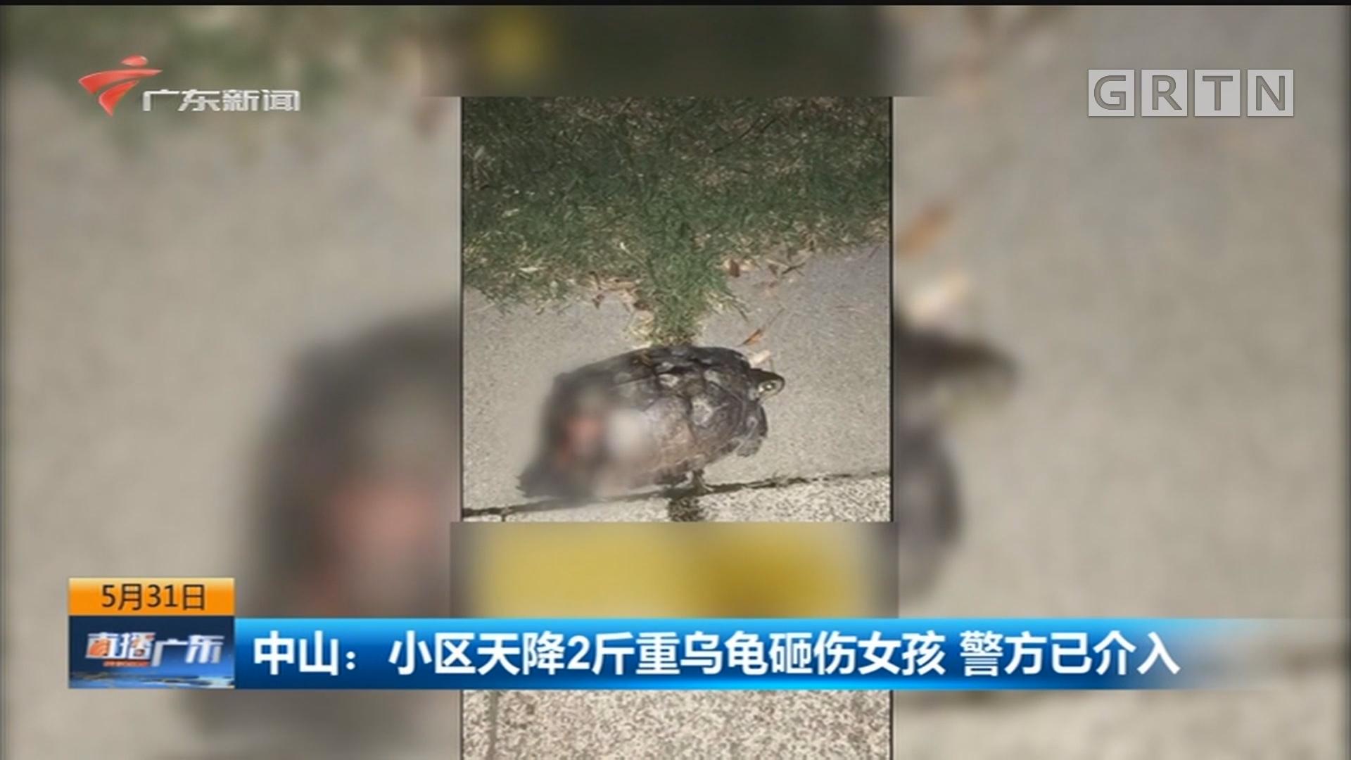 中山:小区天降2斤重乌龟砸伤女孩 警方已介入