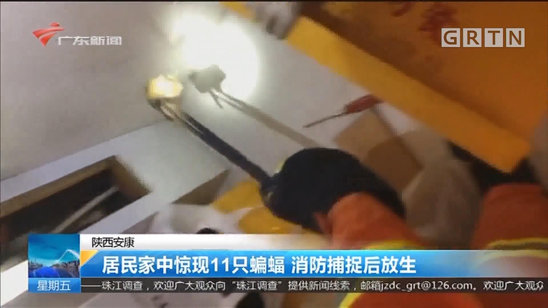 陕西安康:居民家中惊现11只蝙蝠 消防捕捉后放生