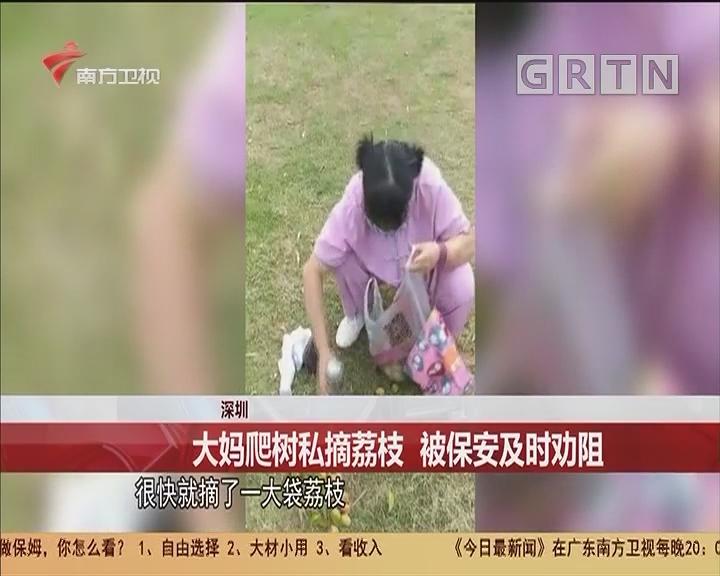 深圳 大媽爬樹私摘荔枝 被保安及時勸阻