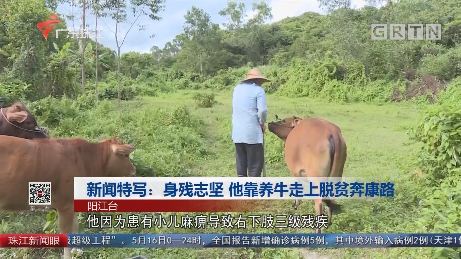 新闻特写:身残志坚 他靠养牛走上脱贫奔康路