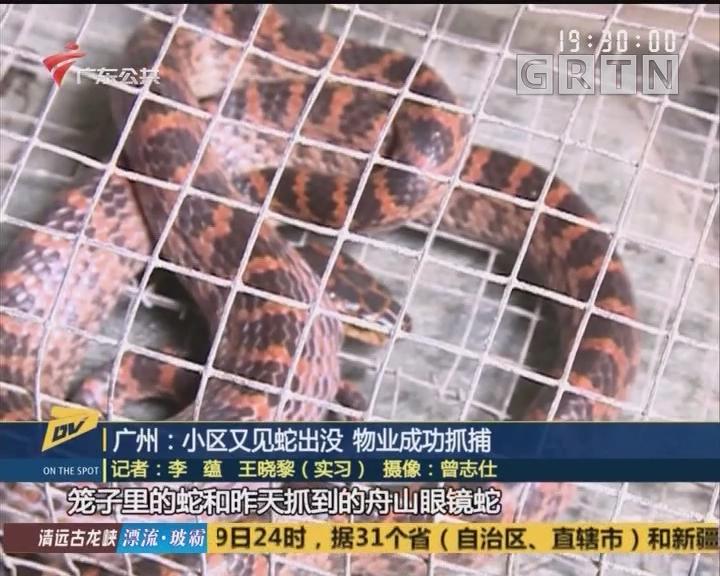 广州:小区又见蛇出没 物业成功抓捕