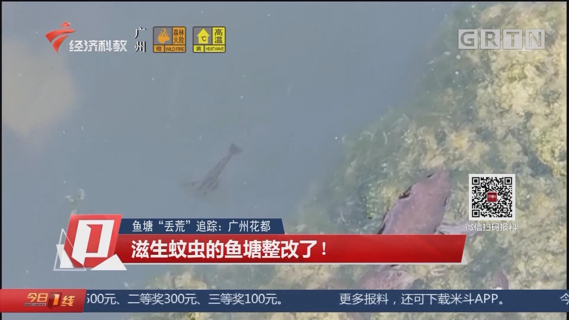 """魚塘""""丟荒""""追蹤:廣州花都 滋生蚊蟲的魚塘整改了!"""