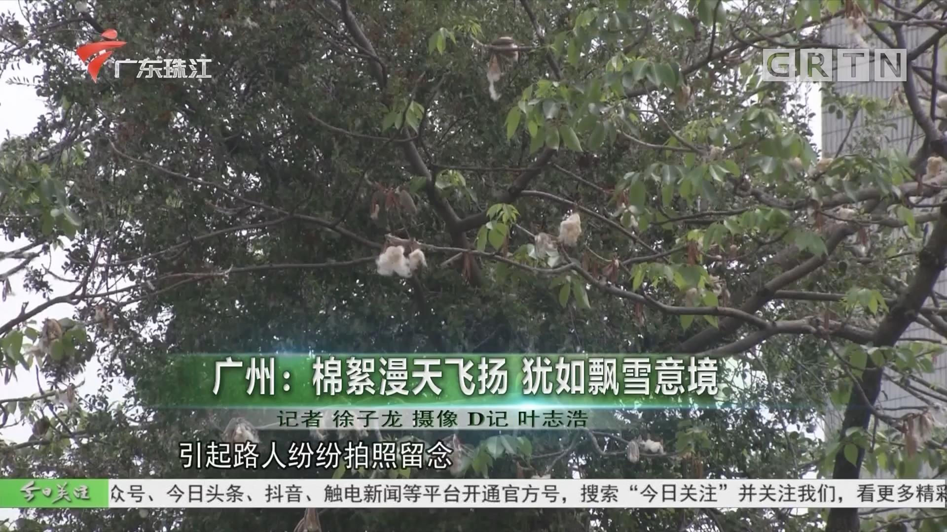 廣州:棉絮漫天飛揚 猶如飄雪意境