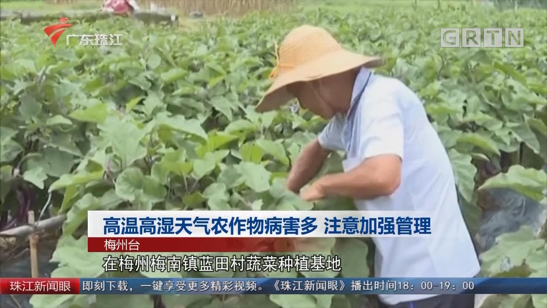 高溫高濕天氣農作物病害多 注意加強管理