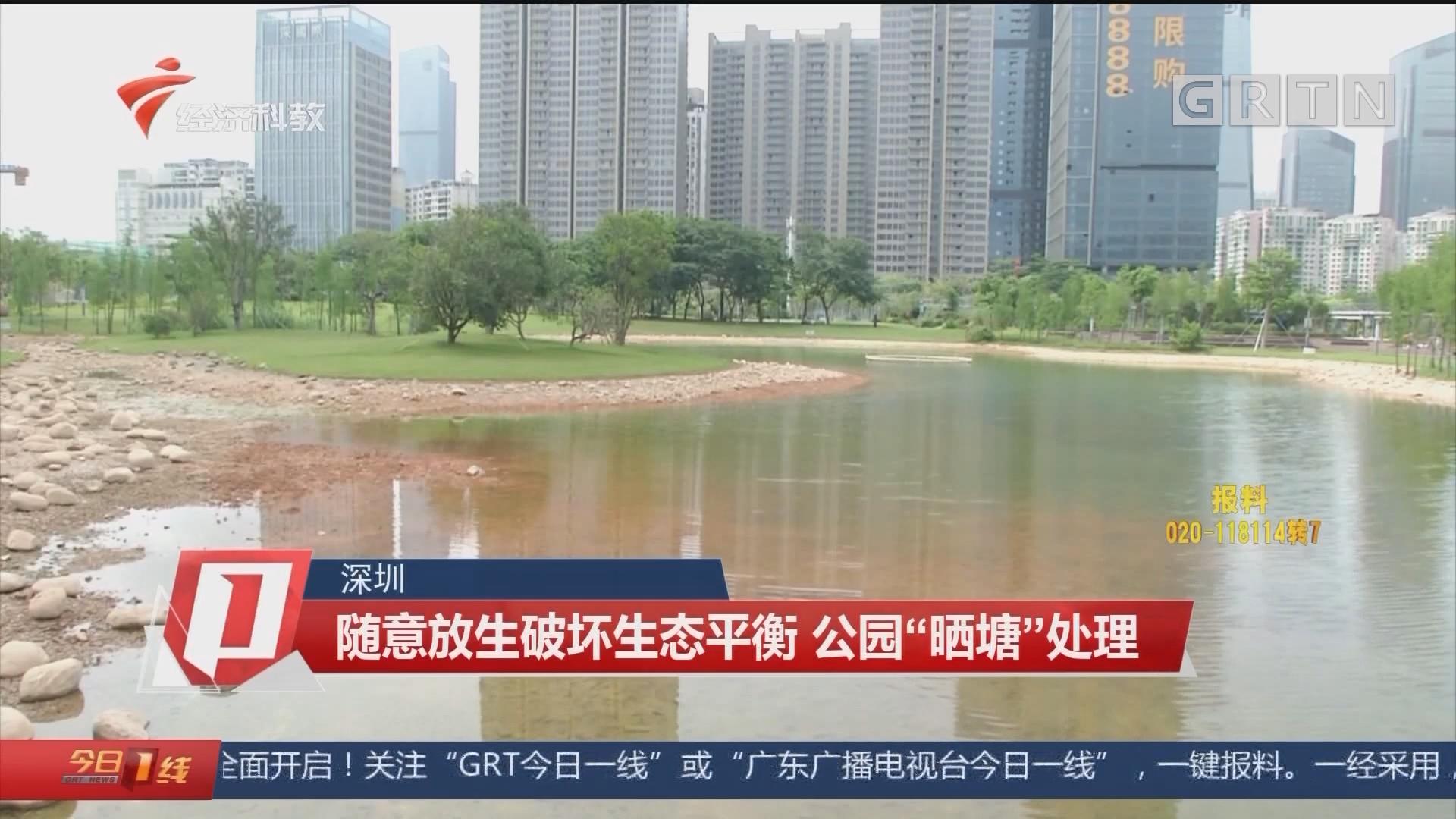 """深圳 随意放生破坏生态平衡 公园""""晒塘""""处理"""