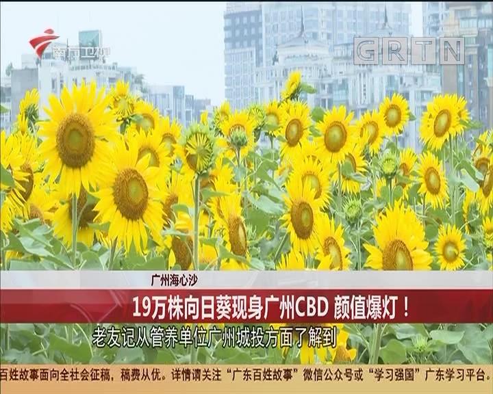 廣州海心沙 19萬株向日葵現身廣州CBD 顏值爆燈!