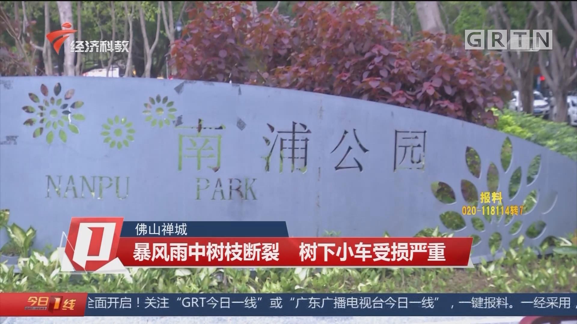 佛山禅城:暴风雨中树枝断裂 树下小车受损严重