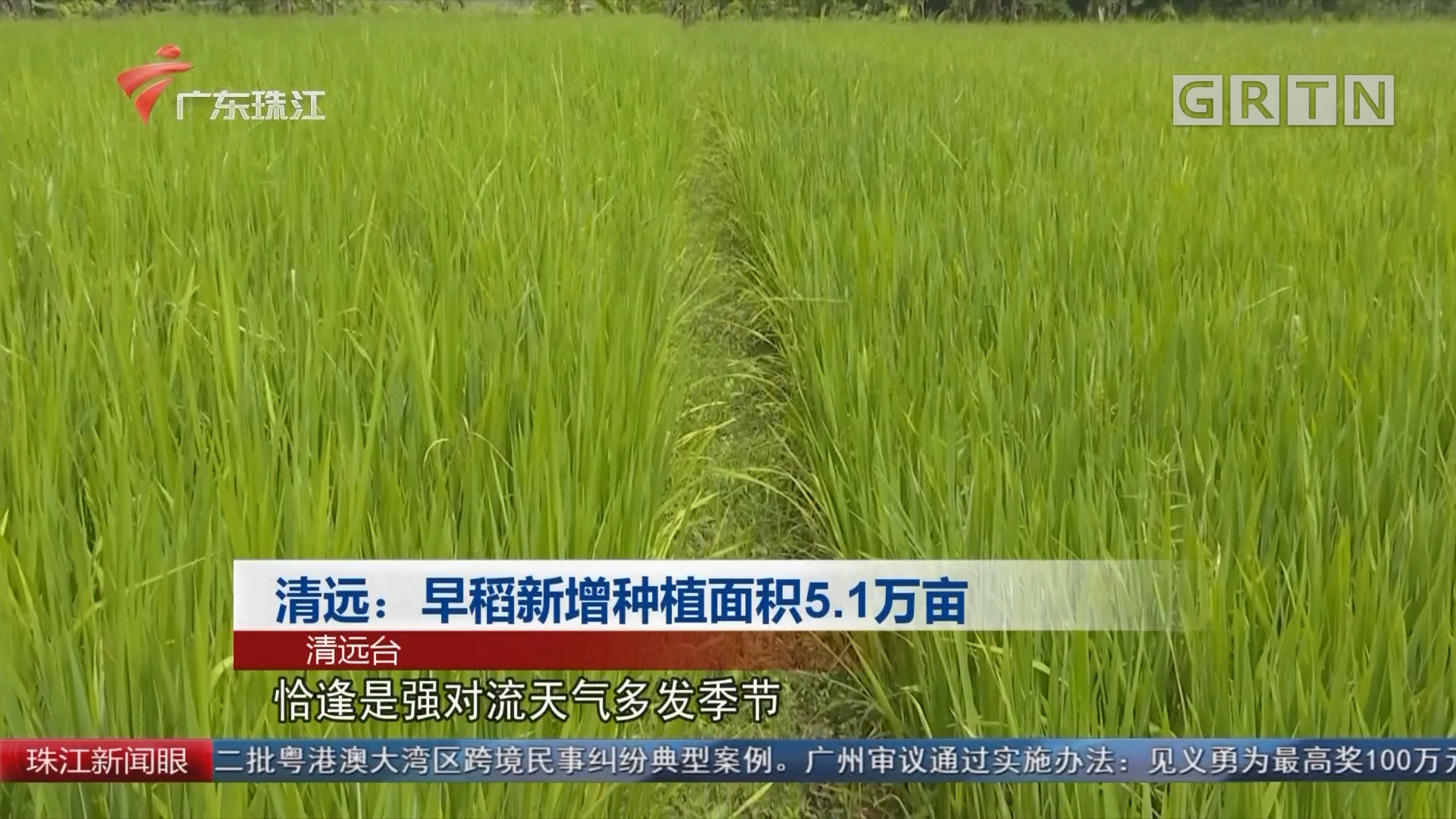 清远:早稻新增种植面积5.1万亩