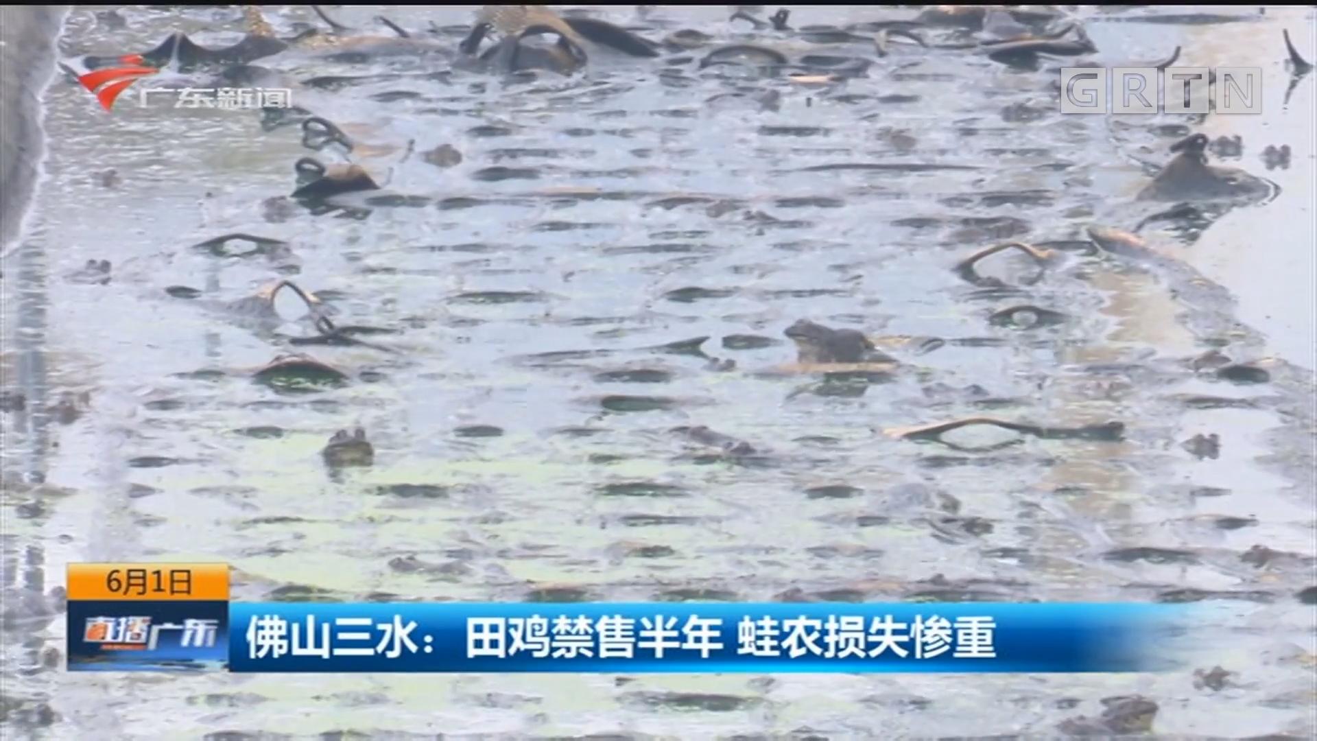 佛山三水:田鸡禁售半年 蛙农损失惨重
