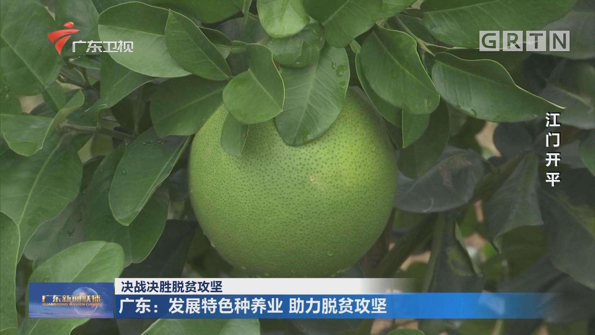 广东:发展特色种养业 助力脱贫攻坚