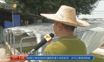 东莞望牛墩:惨!三千斤中华草龟一夜被偷