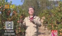 [2018-02-05]摇钱树:原生态年货囤起来