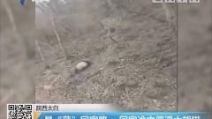 """陕西太白 最""""萌""""回家路:回家途中偶遇大熊猫"""