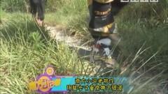 [2020-07-01]南方小记者:南方小记者带你用脚步丈量南古驿道