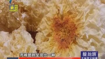 硫磺银耳充斥商场 长期食用可致癌