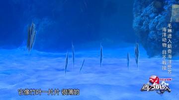 《百万挑战》第1季第8集.mp4