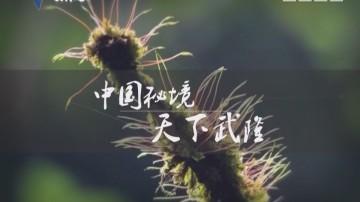 [2017-05-27]纵横天下游:中国秘境 天下武隆
