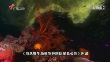 20170507《南粤警视》泣血红珊瑚