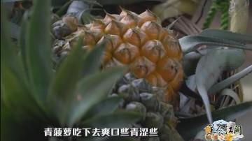 [2017-07-07]美食江门:神湾菠萝