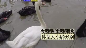 [2017-08-26]动物笑当家:幼鸟识别大作战