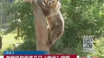"""乌克兰:救助机构收养几只""""幸运""""棕熊"""