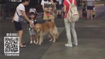 """广州最""""严""""养犬条例 现状:犬只无绳跑 任性便溺"""