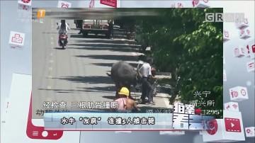 "[HD][2017-09-22]拍案看天下:水牛""发疯""连撞5人被击毙"