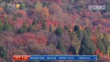 北京:八达岭国家森林公园红叶最佳观赏期
