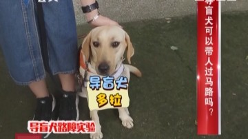 [2017-10-06]生活调查团:导盲犬可以带人过马路吗?