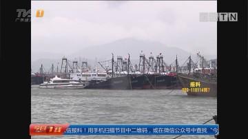 """防御台风""""卡努"""":茂名 两千多渔船回港避风 船员转移上岸"""
