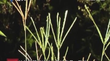 [2017-12-18]天眼追擊:芭蕉林里的秘密